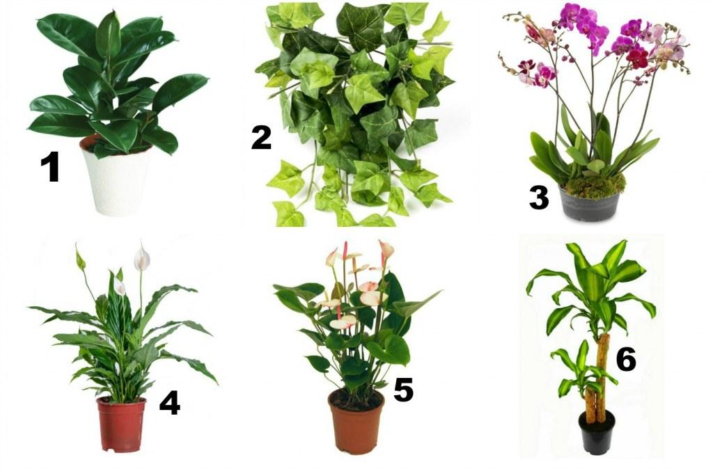 oczyszczanie powietrza rośliny