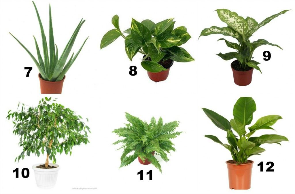 oczyszczanie powietrza kolejne rośliny